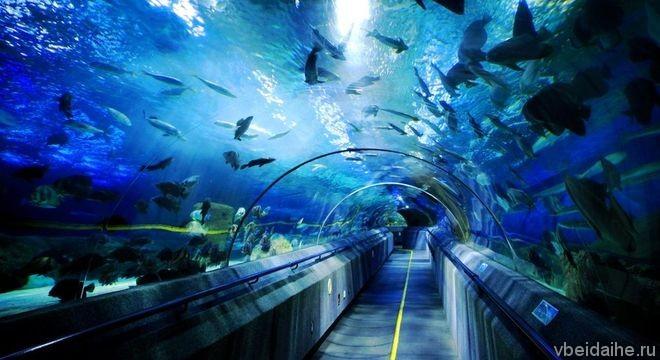 Подводный мир Синао: океанариум и дельфинарий