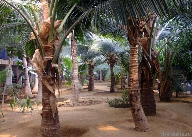 Павильон тропических растений