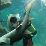 Танцы с акулой